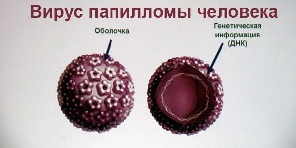 вирус-папилломы-человека-у-женщин
